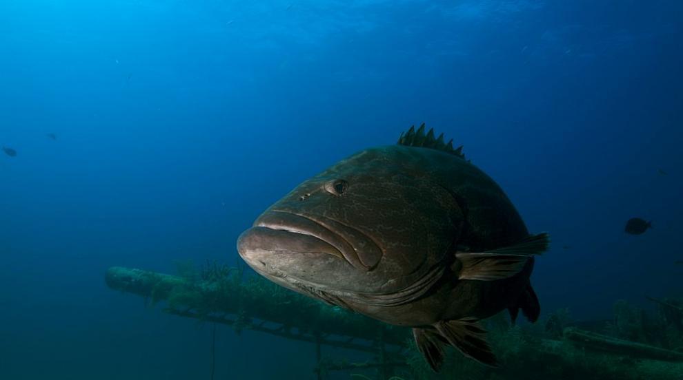 Откриха гигантска риба на австралийски плаж (СНИМКИ)