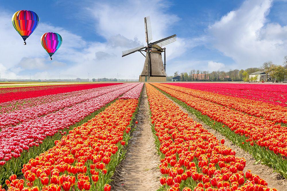 Известният цветен парк Кукенхоф в Лисе, Холандия, е задължителна дестинация през пролетта. Кукенхоф е най-голямата цветна градина в света и определено си заслужава да бъде видяна поне веднъж, особено през пролетта.