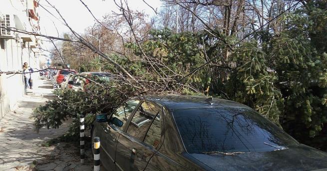 Дърво падна върху лек автомобил в Пловдив, съобщиха от противопожарната