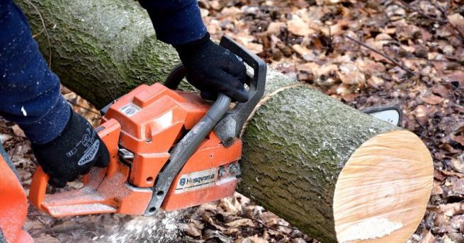 Дърво затисна и уби дървосекач в Трекляно, съобщиха от полицията.