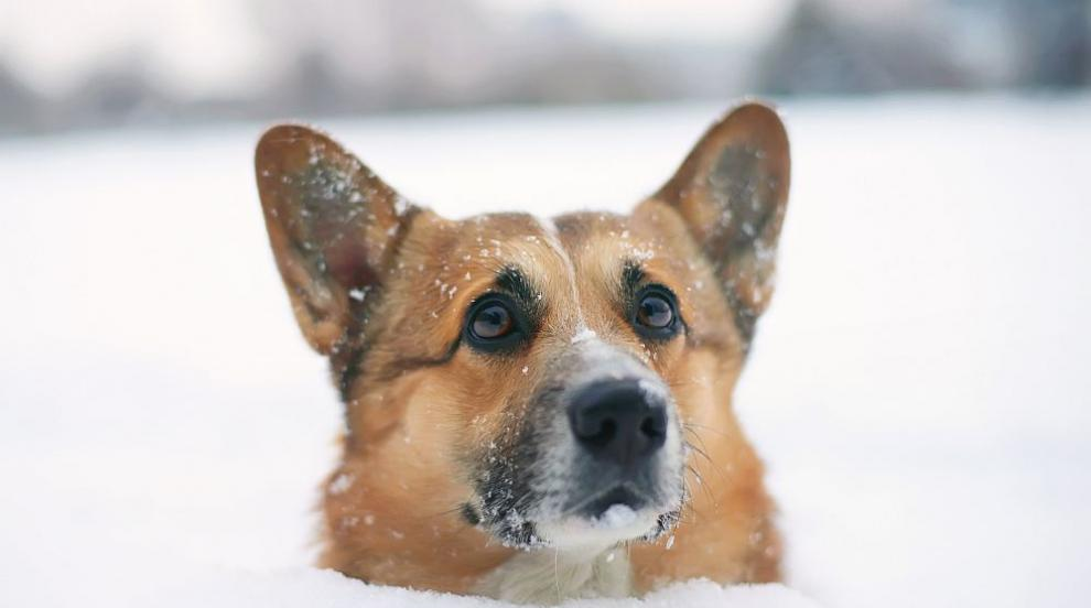Предупреждават за сняг, вятър и поледици в страната