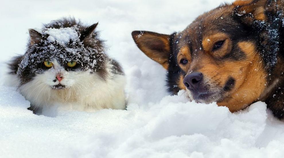 Очаква ни топла зима, прогнозира климатолог (ВИДЕО)