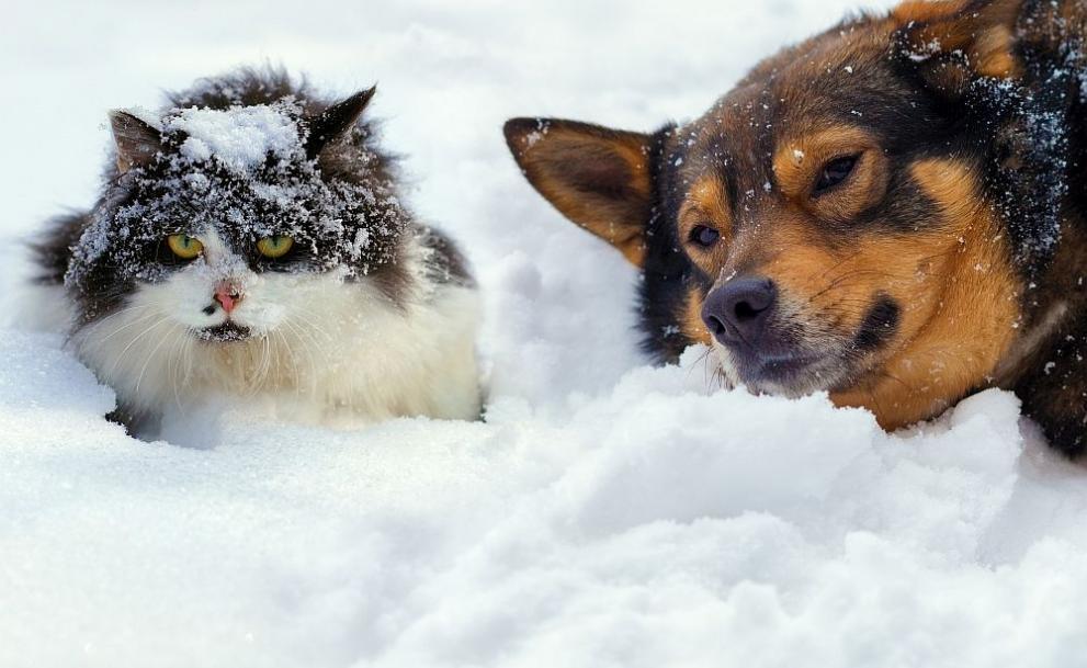Резултат с изображение за вали сняг и дъжд