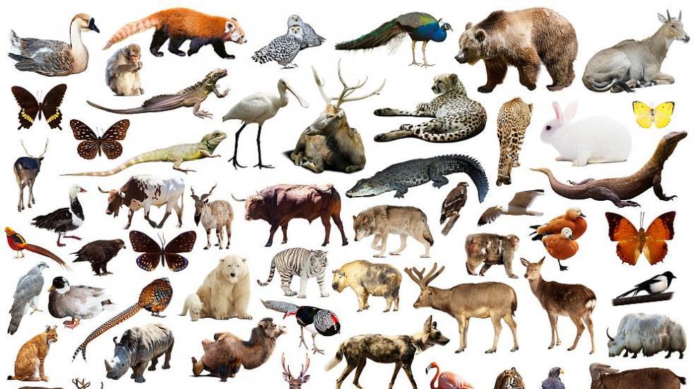 Доклади за биоразнообразие: Има риск от изчезване на видове, сходно с това...