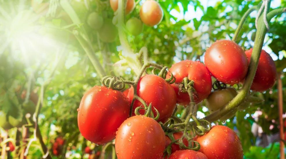 Запознайте се с лекаря сред зеленчуците