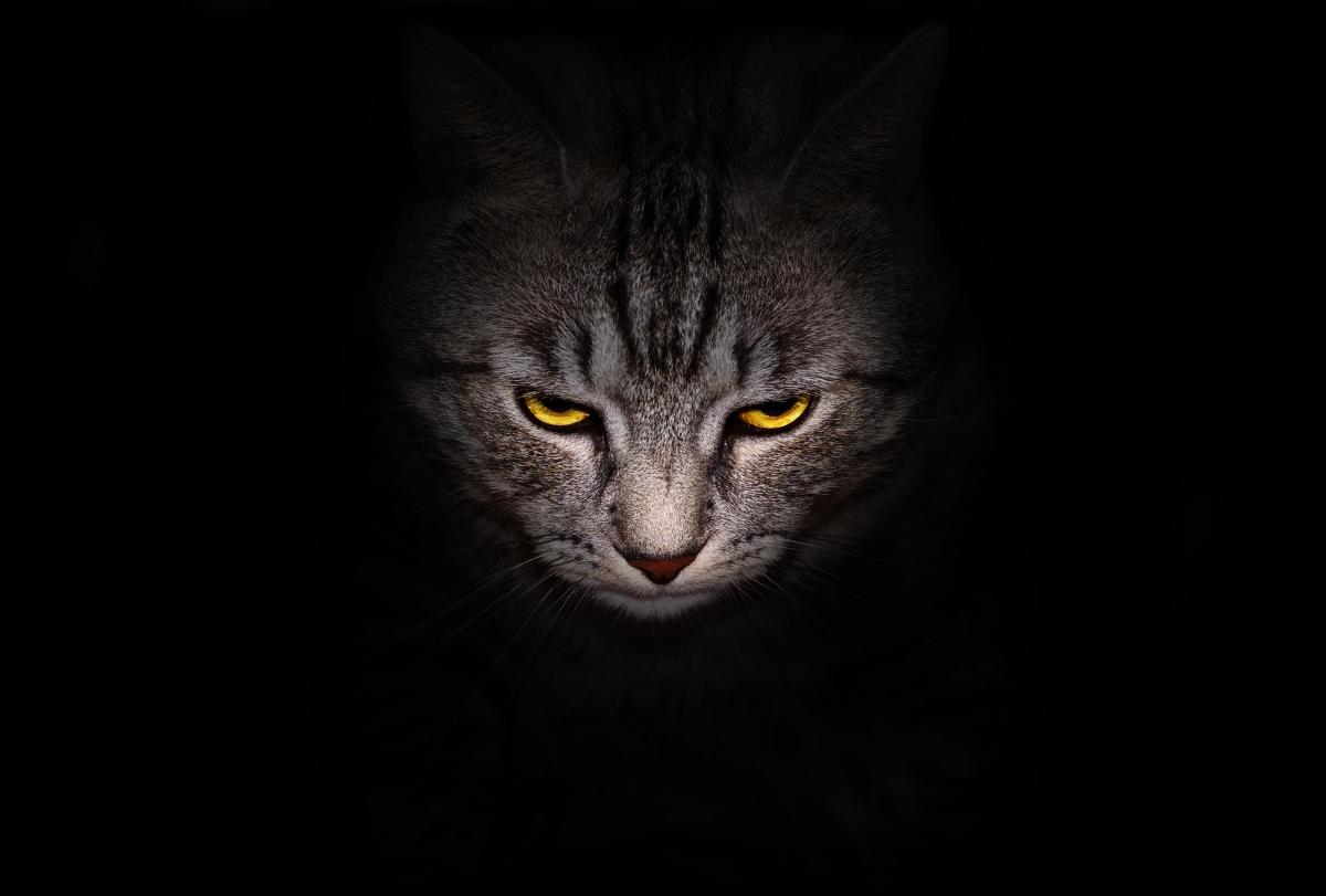 Факт: ако умрете и имате домашен любимец, например котка, тя ще иска да ви изяде.