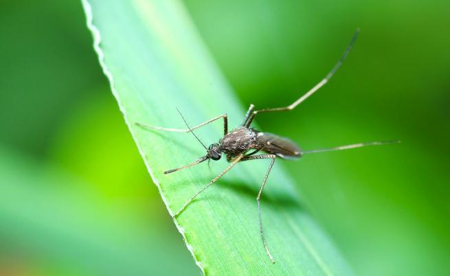 Нова технология избива комарите, пренасящи болести