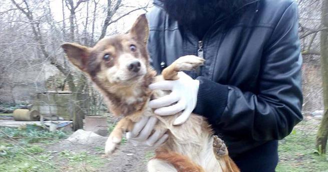 Пореден случай на лошо отношение при отглеждане на кучета край