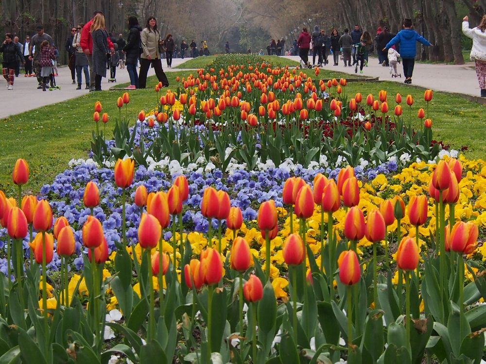 Пролетна красота във Варна