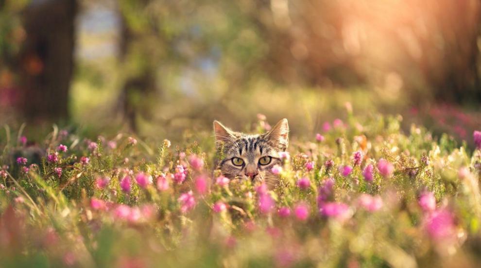 Уикендът ще започне с пролетно очарование и слънце