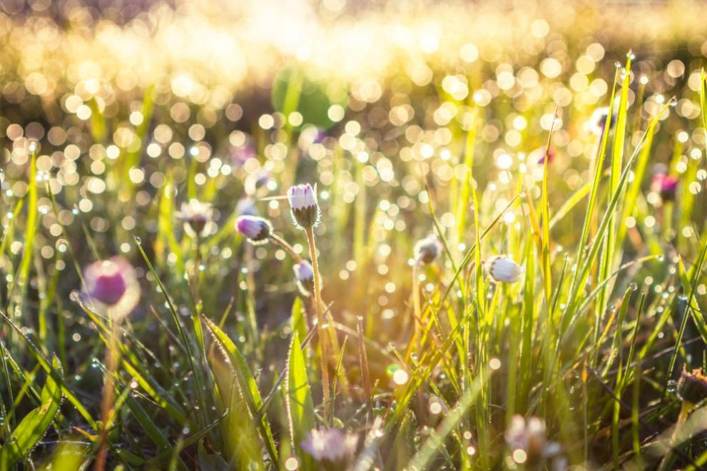 пролет поляна слънце