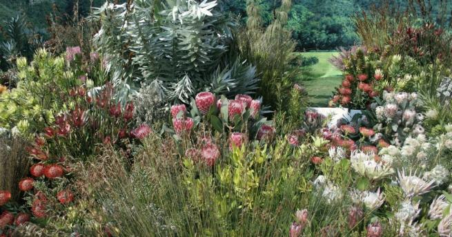 Тези места предлагат гледки, които спират дъха: ботаническите градини показват