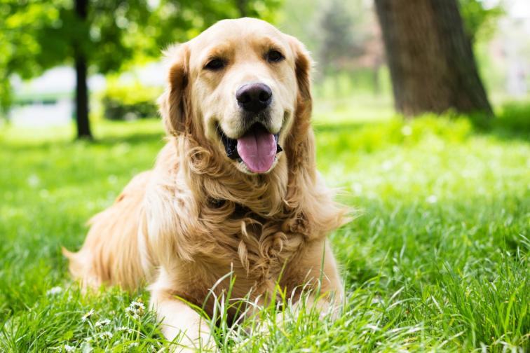 кучета породи
