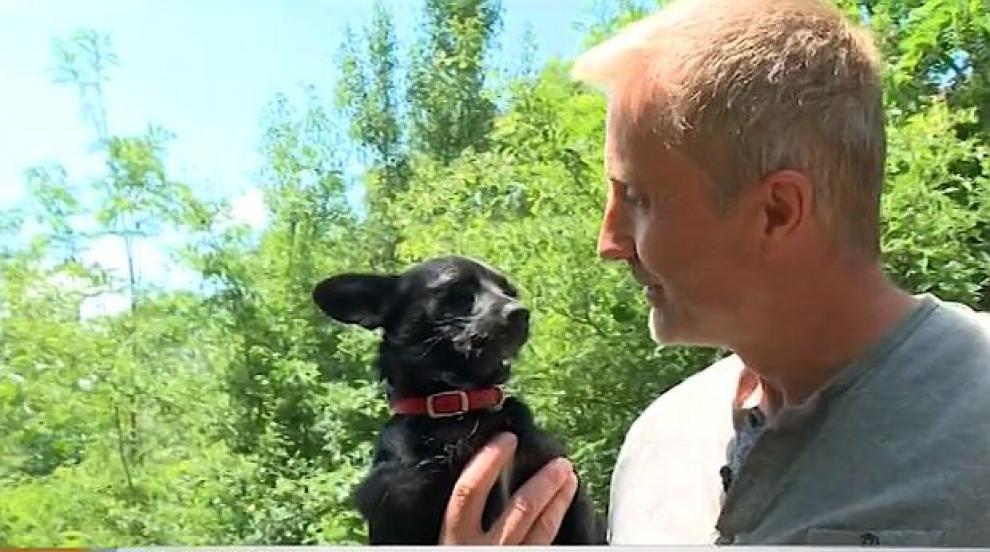 Как британци решиха проблема с бездомните кучета в Дряново