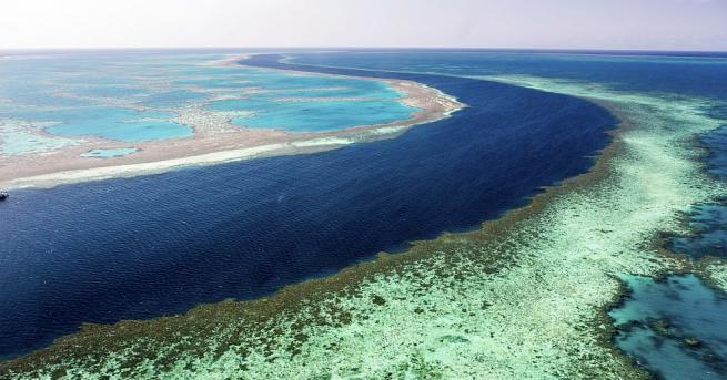 Големият бариерен риф е преживял през току-що завършилото лято в