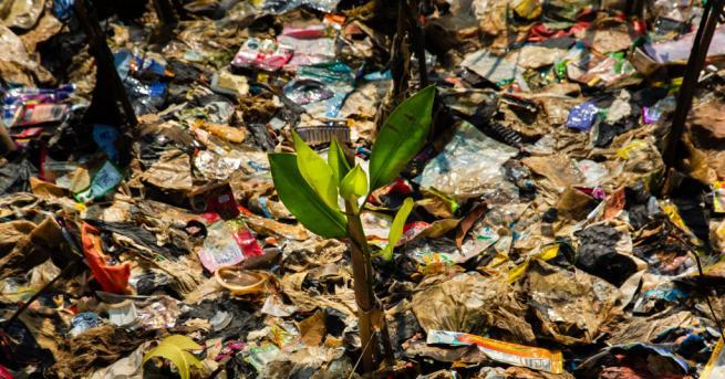 По случай днешния Световен ден за опазване на околната среда,