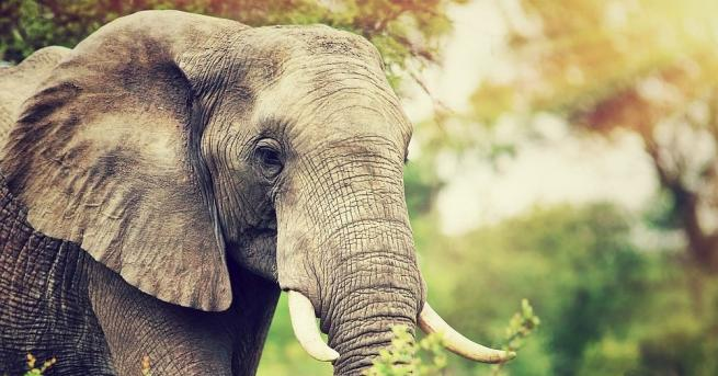 Снимка: Слон уби петима души за една нощ