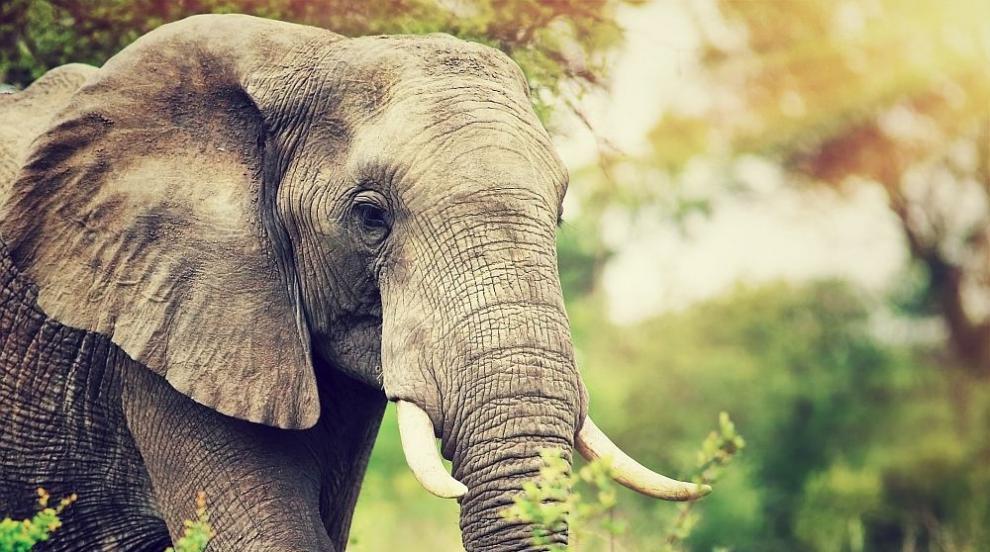 Слон уби петима души за една нощ