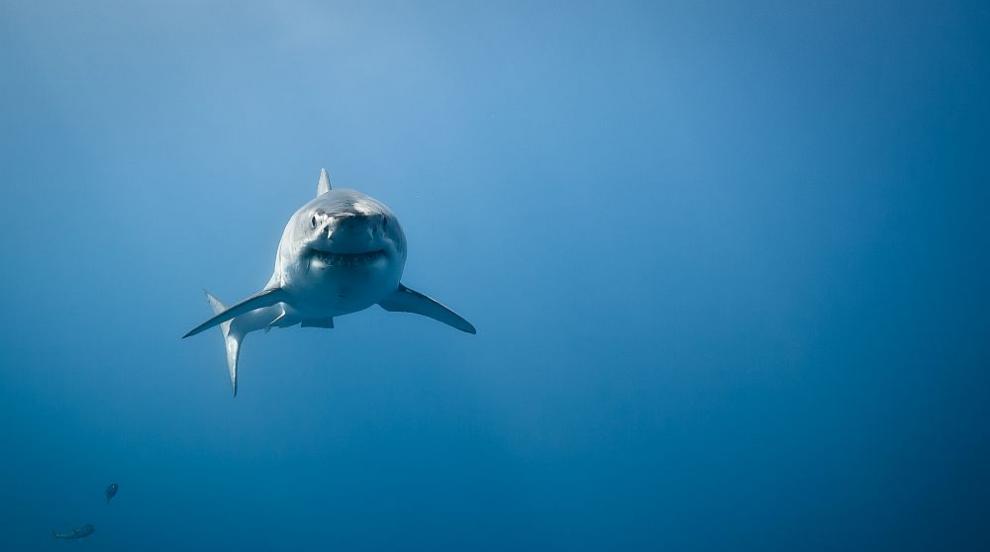 Мъж почина след атака на акула край брега на щата Масачузетс