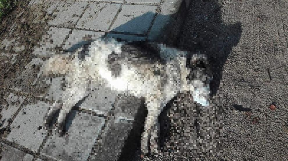 убити кучета Пловдив