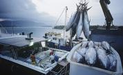Експерт: Черно море умря пред очите ни