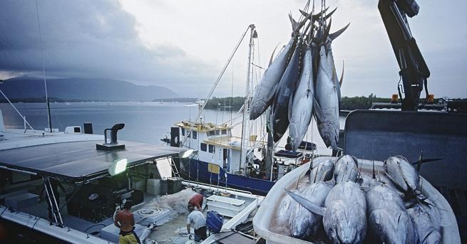 Европа изчерпва запасите от риба, с които разполагадо края на