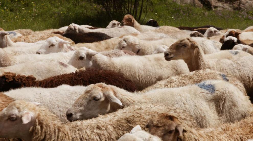 Изплащат обезщетения за евтаназираните животни в Шарково