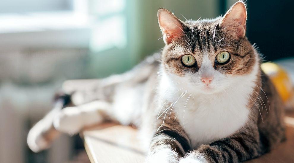 Вижте какво се случва с група котки секунди преди силно земетресение (ВИДЕО)