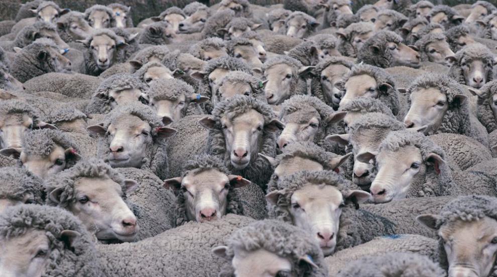 Започна изплащането на обезщетения за евтаназираните животни