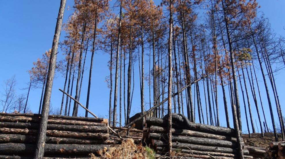 Държавата и НПО-та обединяват усилия срещу незаконния добив на дървесина