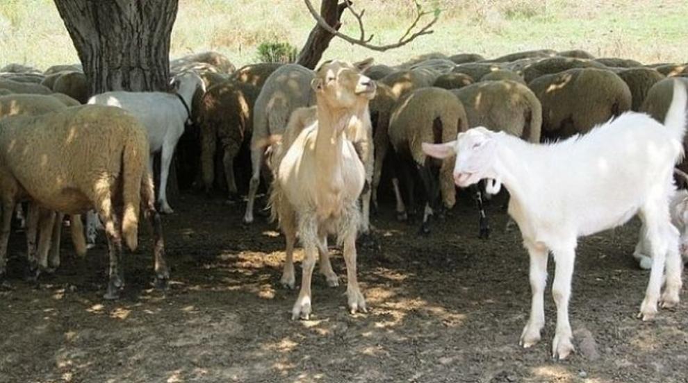 Манолова: Мястото на чиновниците от земеделското министерство е на терен