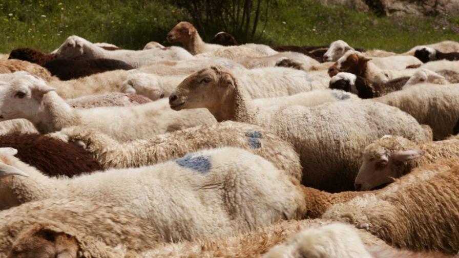 Порожанов: Умъртвени са всички животни в Шарково