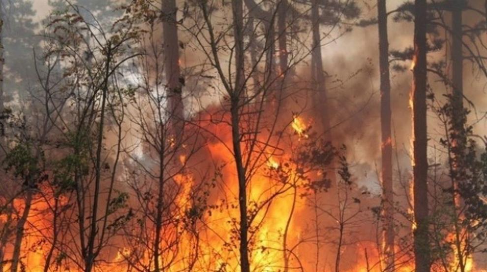 Най-малко 27 души пострадаха при горски и степни пожари в Русия