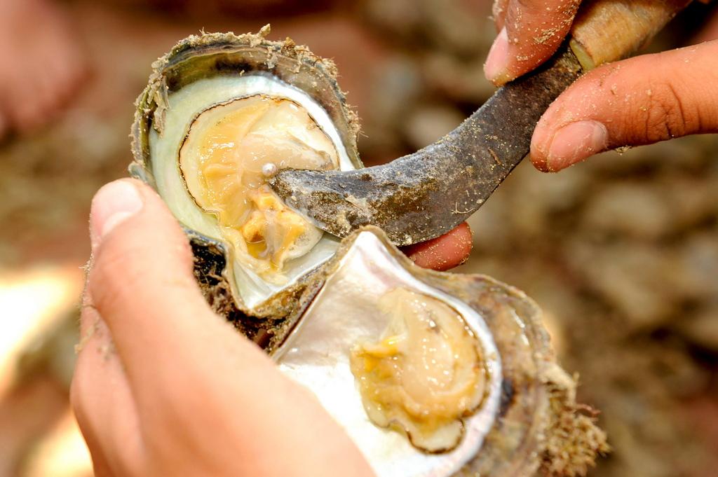 Перлата се образува когато песъчинка или друга дребна частица случайно попадне в тялото на мидата и започне да я дразни. Ако мидата не успее да изхвърли чуждото тяло, тя започва да отделя специално вещество, наречено седеф, с което го обвива.