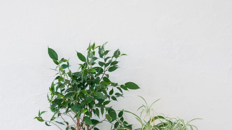 Съвети за по-чист въздух у дома