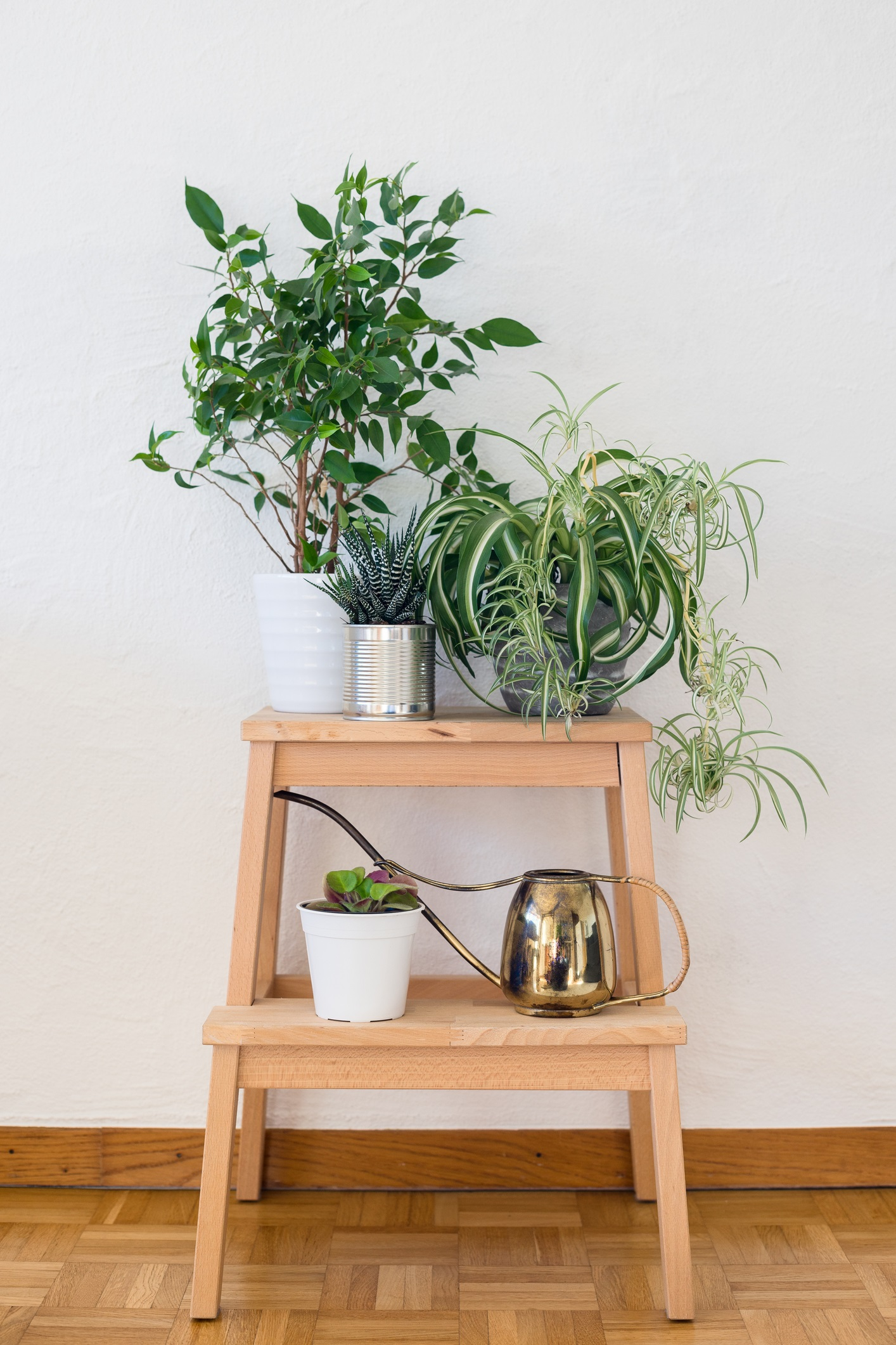 <p>Растения<br /> <br /> Въздухът на закрито е десет пъти по-замърсен от този навън, така че, когато седим в офиса или у дома, дишаме рециклиран въздух, който минава през климатик и така сме изложени на често срещани токсични химикали. Установено е, че растенията са най-добрият начин за намаляването на тези химикали в домашна или офис среда. Растенията, които най-добре се справят с тази задача са: Фикус бенджамина, Дяволски бръшлян, Лилия фламинго, Змийско растение, Арека (бел. ред. вид палма), Зелена лилия, Спатифилум и папратовидните растения.</p>