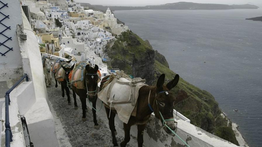 Как туристите осакатяват магаретата в Санторини