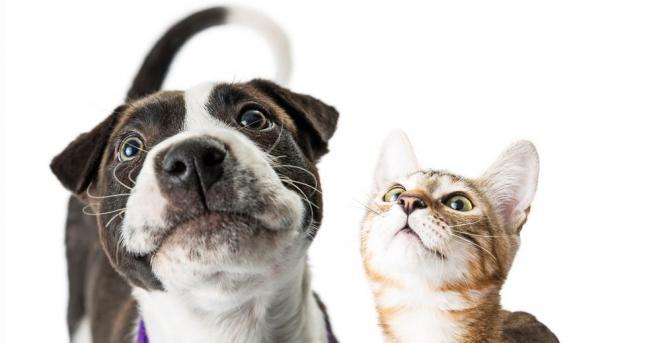 Руски кинолози опровергаха съществуването на генетична вражда между кучетата и