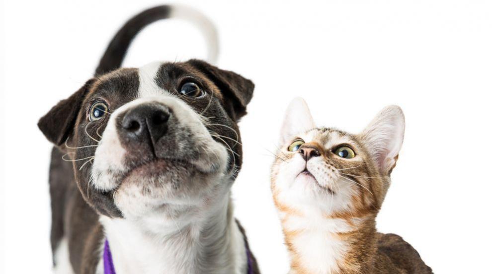 Кинолози опровергаха генетичната вражда между кучетата и котките