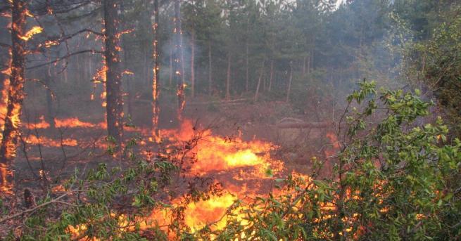 Горските пожари това лято са значително по-малко от миналото Всички