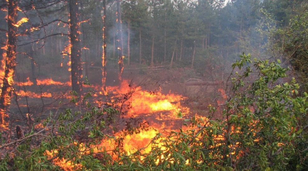 Огнеборци локализираха пожара над Карлово (ВИДЕО)