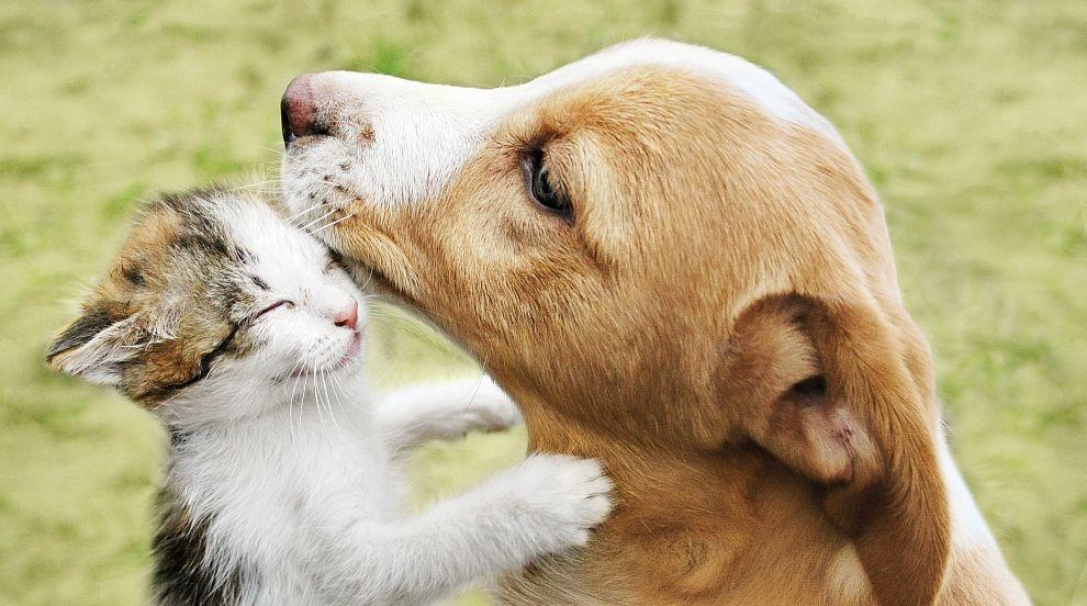 Кой ръси отрова за животни по улиците на Бургас? (ВИДЕО)