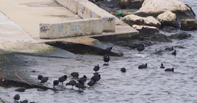 Спасителна операция тече в района на Южния плаж във Варна.