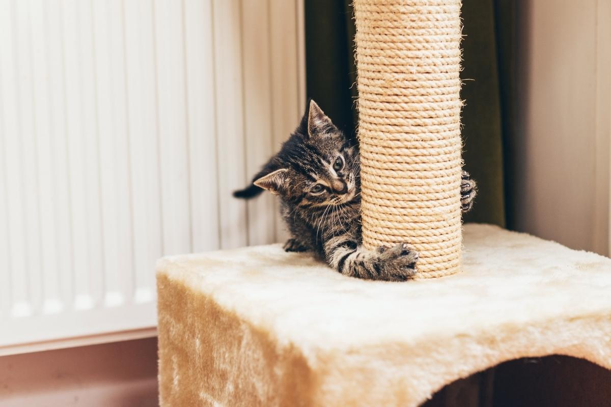 На котката ви й е естествено заложено да се катери. Инстинкт, останал от времената, когато тя е била диво животно.