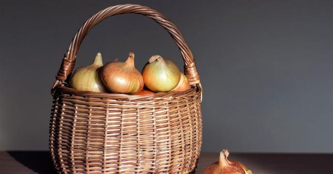 Британският градинар ДейвидСтотард отгледа кромид лук с тегло 4,54 кг,