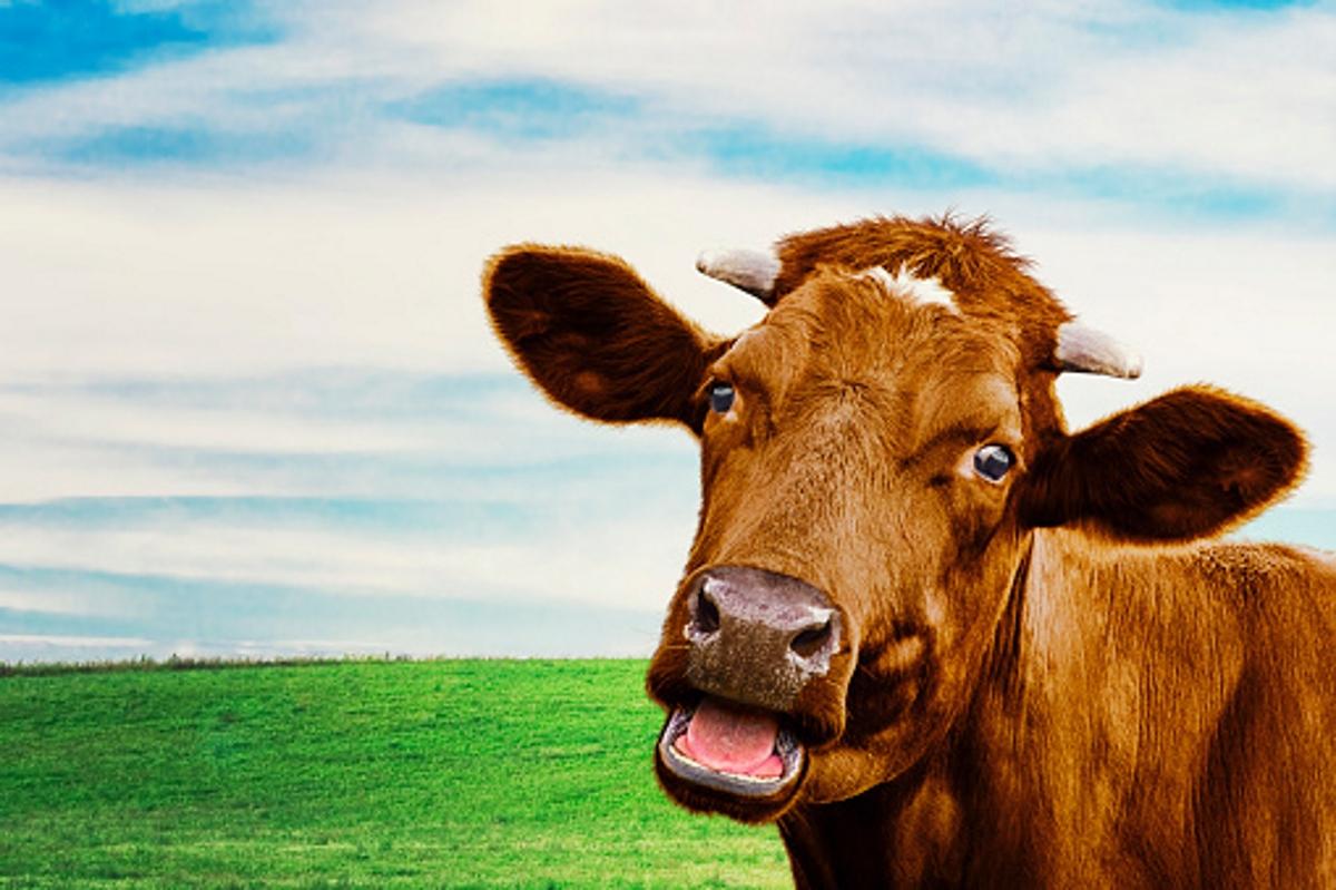 Хората, които страдат от Боантропия смятат, че са крава или бик и искат да живеят като такива.