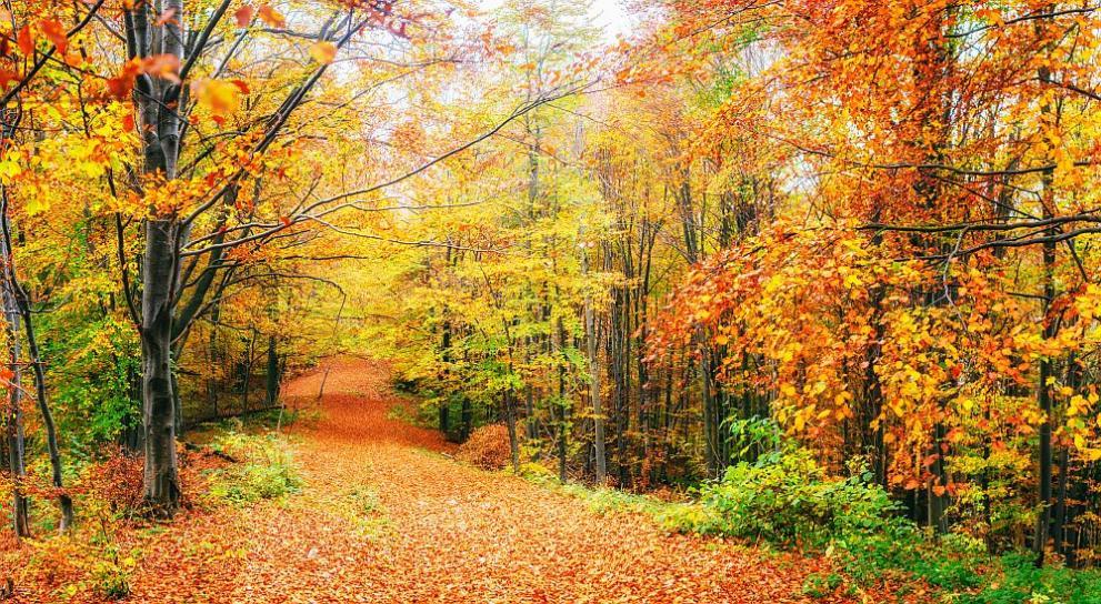 времето есен
