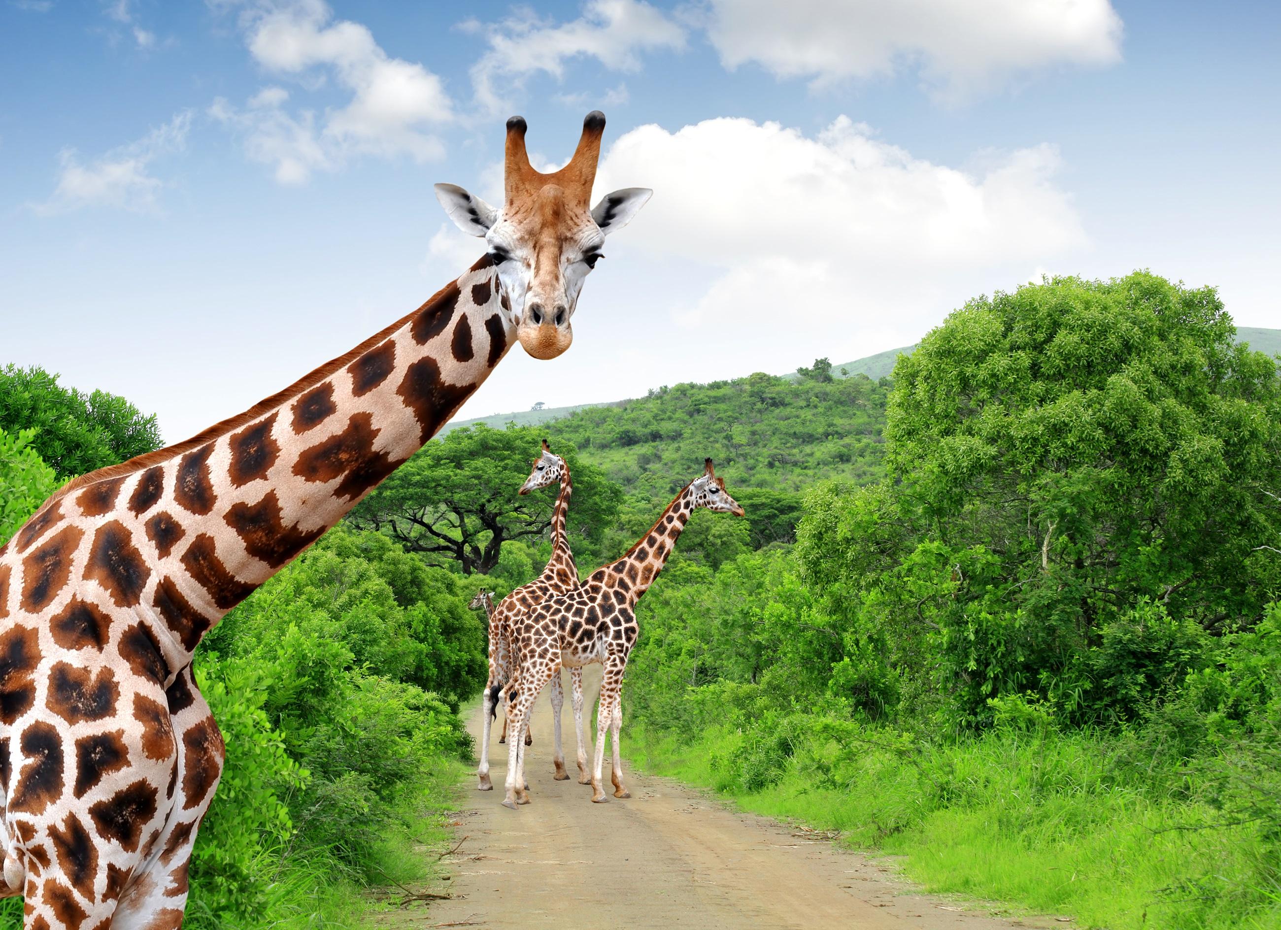 """Национален парк Крюгер, Южна Африка<br /> <br /> Огромният национален парк Крюгер (с площ колкото Израел или Уелс) е достатъчно голям, за да предложи по нещо за всеки. С разнообразна дива природа, включително Голямата петица, отличната пътна мрежа на Крюгер означава, че повечето райони са достъпни дори с превозни средства на две колела. Често го наричат """"укротената пустош"""" заради множеството пътища и отлична инфраструктура, но това го прави изключително подходящ за онези, които искат да идат на сафари в Африка, но не искат прекалено екстремни изживявания."""