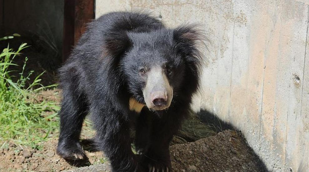 Зоопаркът в София и Столичната библиотека отварят от...