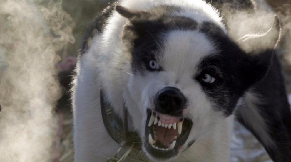 Куче нахапа 3-годишно дете в кърджалийско село